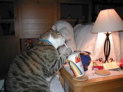 Eine Katze trinkt mit einem Strohhalm aus einem McDonalds-Becher.