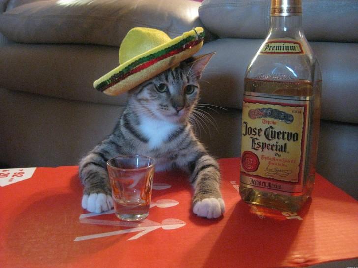 Eine Katze hat einen Sombrero auf dem Kopf und sitzt an einem Tisch. Vor ihr steht ein Glas und neben ihr eine große Flasche Tequila. Ein lustiges Silvester-Bild.