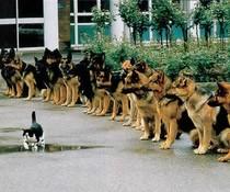 Katze und Hunde