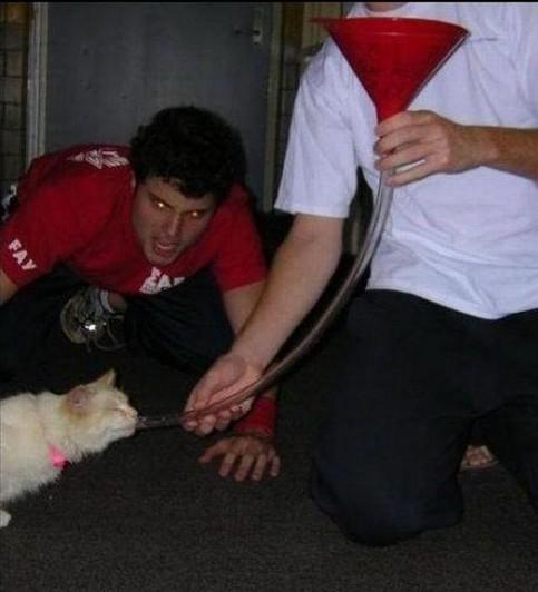Eine Katze wird von Jugendelichen mit einem Schlauch und einem Trichter abgefüllt.