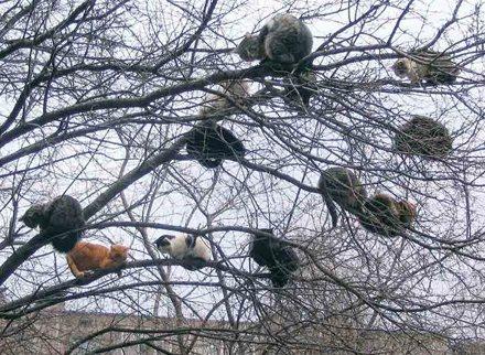 Lauter Katzen liegen in den Ästen eines Baums.