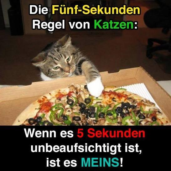 """Eine Katze greift nach einer Pizza in einem Pizzakarton. Dazu steht der Text: """"Die Fünf-Sekunden-Regel von Katzen: Wenn es 5 Sekunden unbeaufsichtigt ist, ist es meins!"""""""