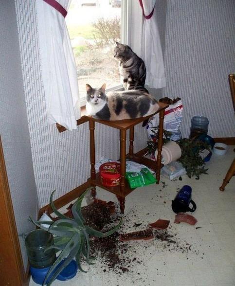 Zwei Katzen sitzen auf einem Tisch und schauen unschuldig in die Kamera. Auf dem Boden liegen zebrochene Blumenvasen und Blumenerde.