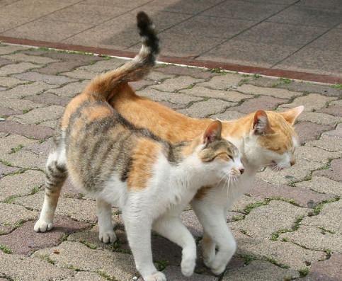 Zwei Katzen schmusen.