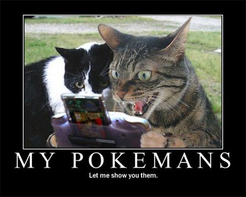 Zwei Katzen spielen ein Videospiel - die Pokemans!