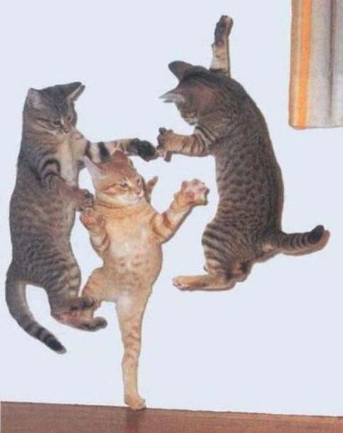 Drei Katzen springen in die Höhe.