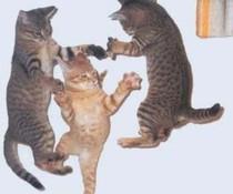 Katzen-Action