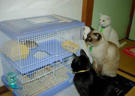 Vier Katzen sitzen vor einem Käfig, in dem eine Maus eingeschlossen ist.