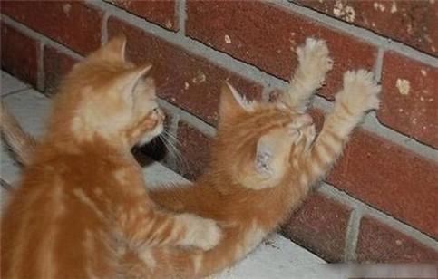 Eine Katze hält sich an einer Mauer fest, eine andere Katze schmiegt sich von hinten an sie.
