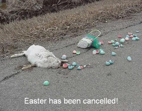 Easter has been canceled. Ein totgefahrener Hase mit Eiern auf der Strasse.