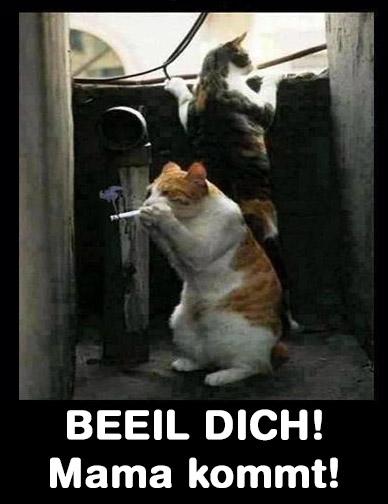 """Zwei Katzen ziehen an einem Joint oder Zigarette. Dabei steht der Text """"Beeil dich. Mama kommt!"""""""