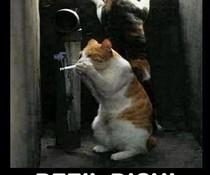 Kiffende Katzen
