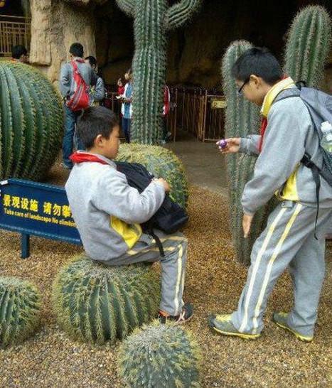 Ein Kind sitzt auf einem Kaktus, wahrscheinlich hält der Junge den Kaktus für einen Stuhl.