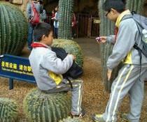 Kaktushocker