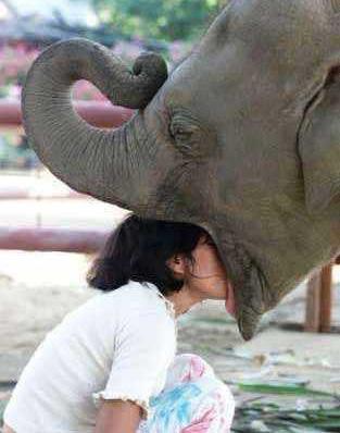 Eine Frau steckt ihren Kopf in das Maul eines Elefanten.