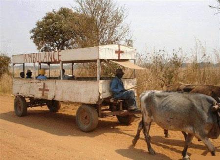 Ein Krankenwagen in Afrika, der von Ochsen gezogen wird.