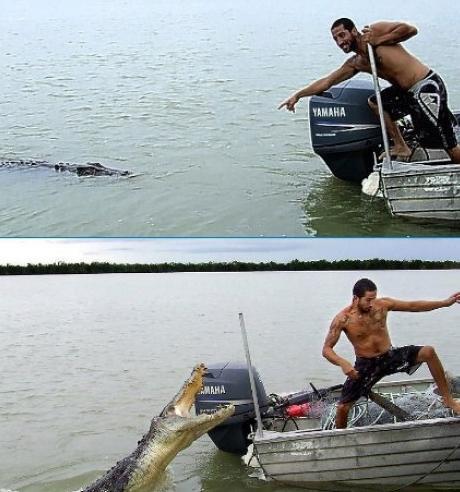 Ein Mann in einem Boot wird von einem Krokodil attakiert.