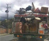 Tiertransport