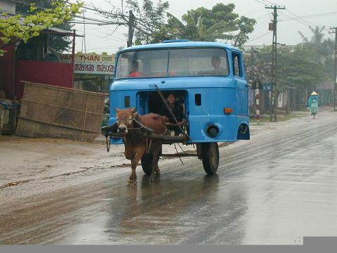 Ein LKW-Chasis wird von einer Kuh gezogen.
