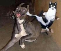 Kung-Fu-Katze