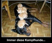 Kuschelhunde