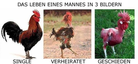 """Drei Bilder, die das Leben eines Mannes symbolisieren: Ein stolzer Hahn, er ist """"Single"""". Ein recht gerupfter Hahn, er ist """"verheiratet"""". Ein Hahn komplett ohne Federn, er ist """"geschieden"""". Das Leben eines Mannes in drei Bildern."""
