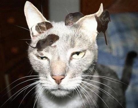 Eine Katze ist von Mäuschen bevölkert, sie schaut ziemlich genervt.