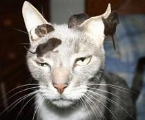 Genervte Katze
