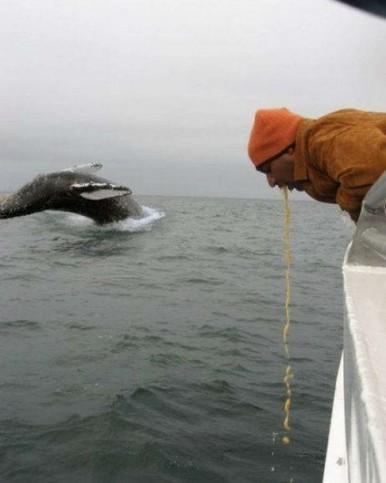 Ein Mann kotzt, hinter ihm ein Wal im Meer.