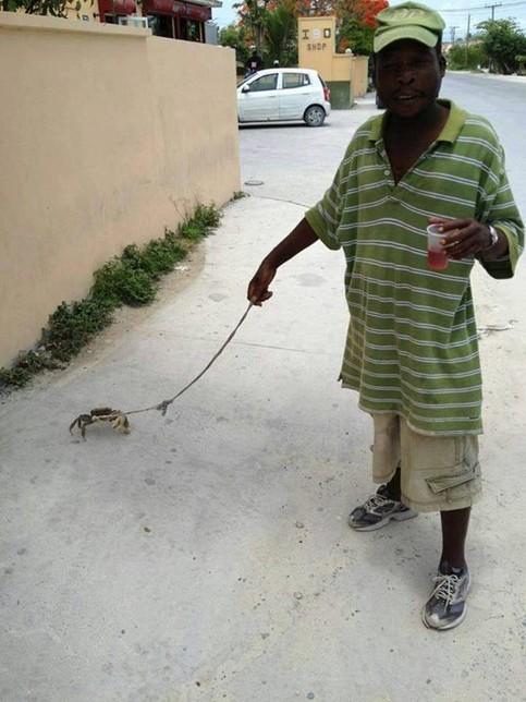 Ein Mann führt eine Krabbe an einer Leine über einen Bürgersteig.