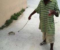 Gassi mit Krabbe