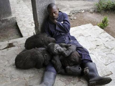 Ein Mann macht zusammen mit Affen ein Nickerchen.