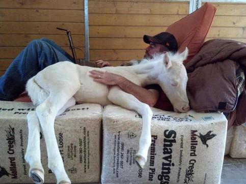 Ein Mann liegt kuschelnd mit einem Pferd auf Strohpackungen.