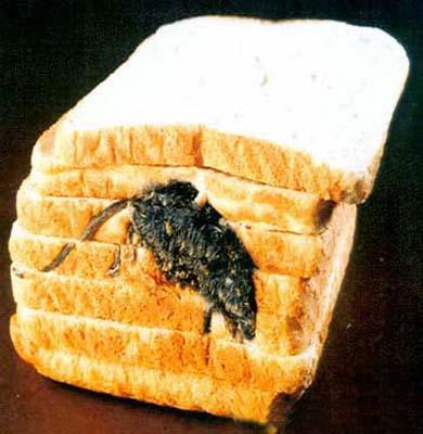 Eine tote Maus ist in einen Stapel Toastbrot gepresst.