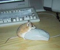 Mäuseliebe