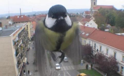 Eine Meise fliegt vor einem Fenster.