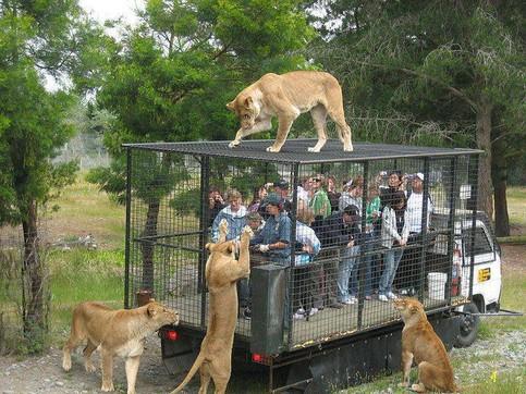 Eine Gruppe Menschen sind in einem Käfig eingesperrt, der auf einem LKW montiert ist. Auf und um den Käfig befinden sich gefrässige Löwen.