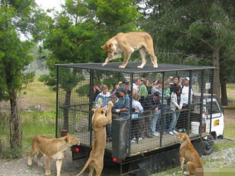 Menschen sind in einem Käfig eingesperrt, während Raubtiere um den Käfig herumschleichen.
