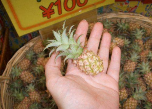 Eine Mini-Ananas in China ist so klein, das man sie locker mit einer Hand umschliessen kann.