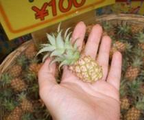 Mini-Ananas