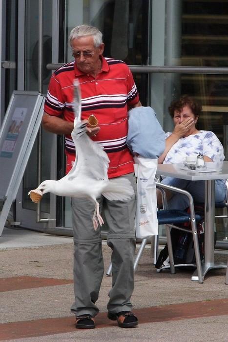 Eine Möwe klaut einem Mann das Eis aus der Hand.