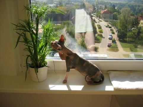 Ein Mann fotografiert seine Katze, dabei spiegelt sich sein nackter Unterkörper in einer Fensterscheibe.