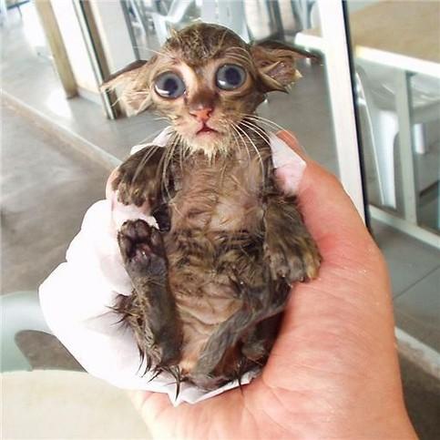 Eine nasse Katze.