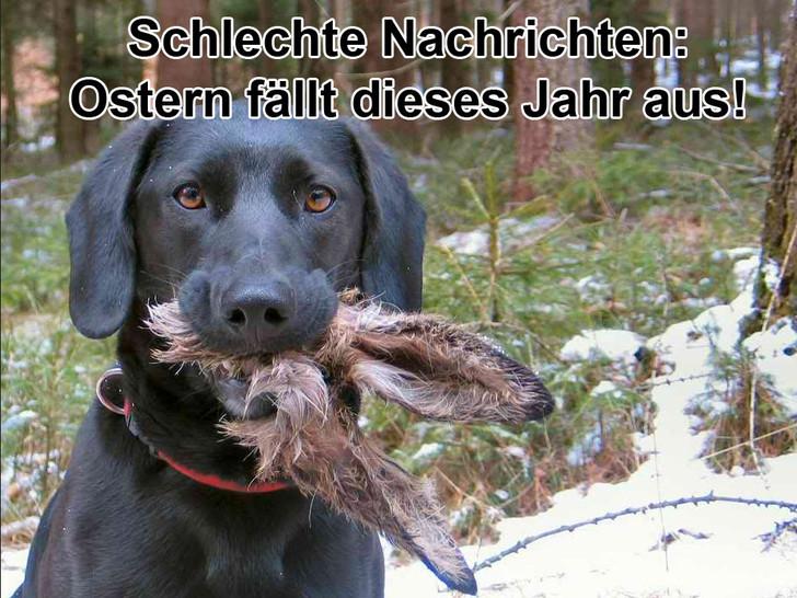 """Ein Jagdhund hat in seinem Maul die Ohren eines Hasen. Dabei steht der Text: """"Schlechte Nachrichten. Ostern fällt dieses Jahr aus."""""""