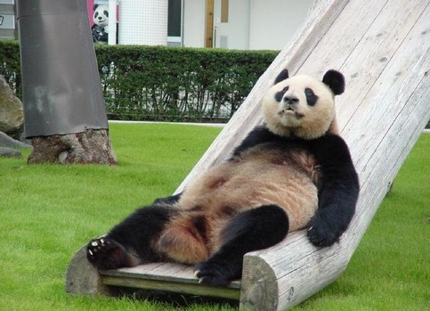 Ein Panda rutscht eine Rutsche hinunter
