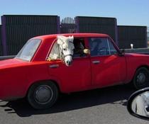 Pferdetransport