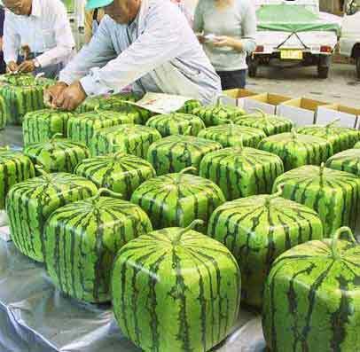 Quadratische Melonen
