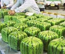 Quadratmelonen