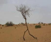 Rennender Baum