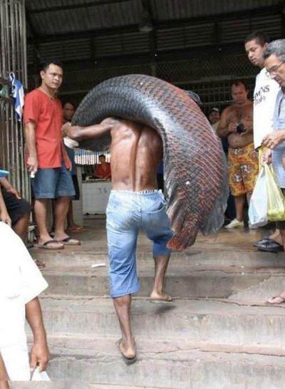 Ein Mann trägt einen unglaublich großen Fisch auf seinen Schultern.